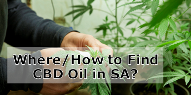 Cannabis Oil in South Africa – Where and How?